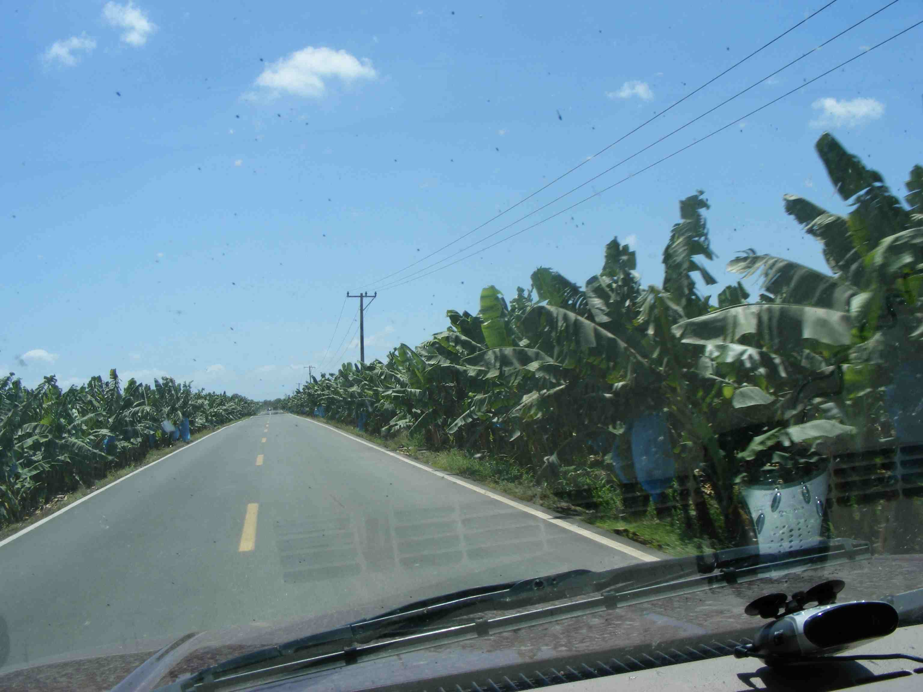50 km Banana Plantations