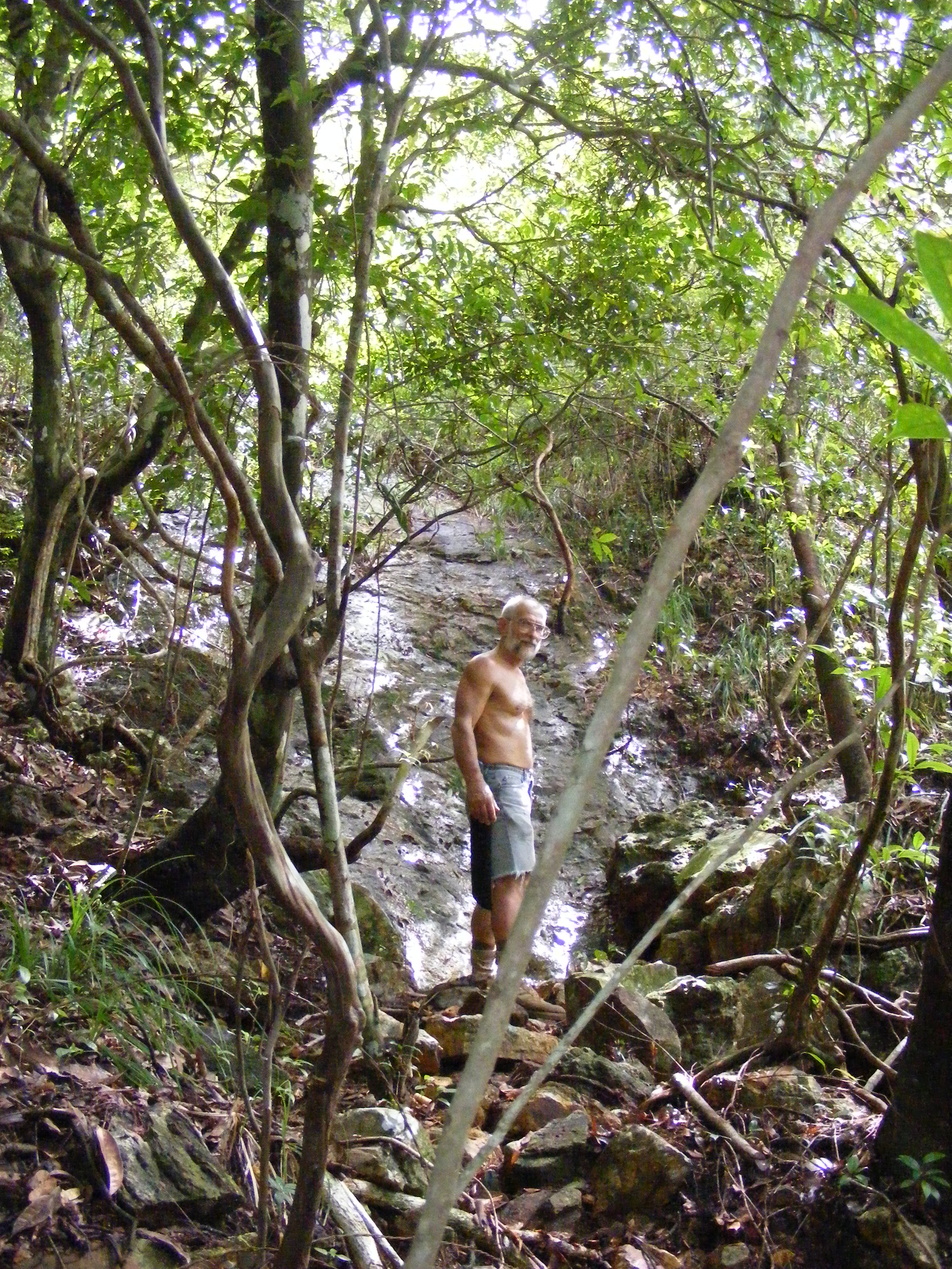 JungleAndWaterfalls