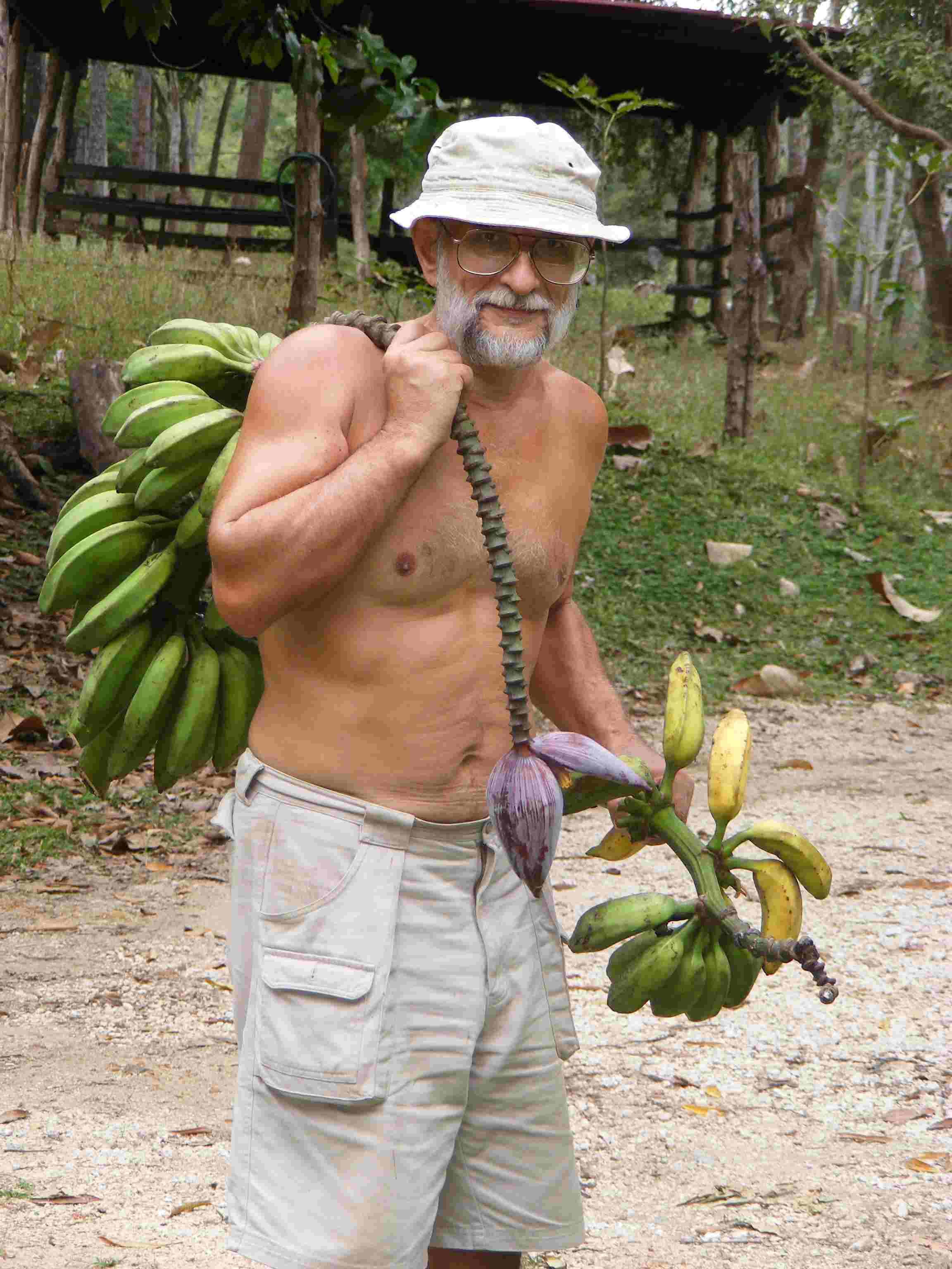 The fruits of tropics